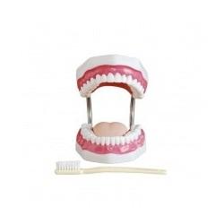MODEL INSTRUKTAŻU HIGIENY JAMY USTNEJ sklep stomatologiczny oldent